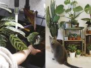 Książka Projekt Rośliny