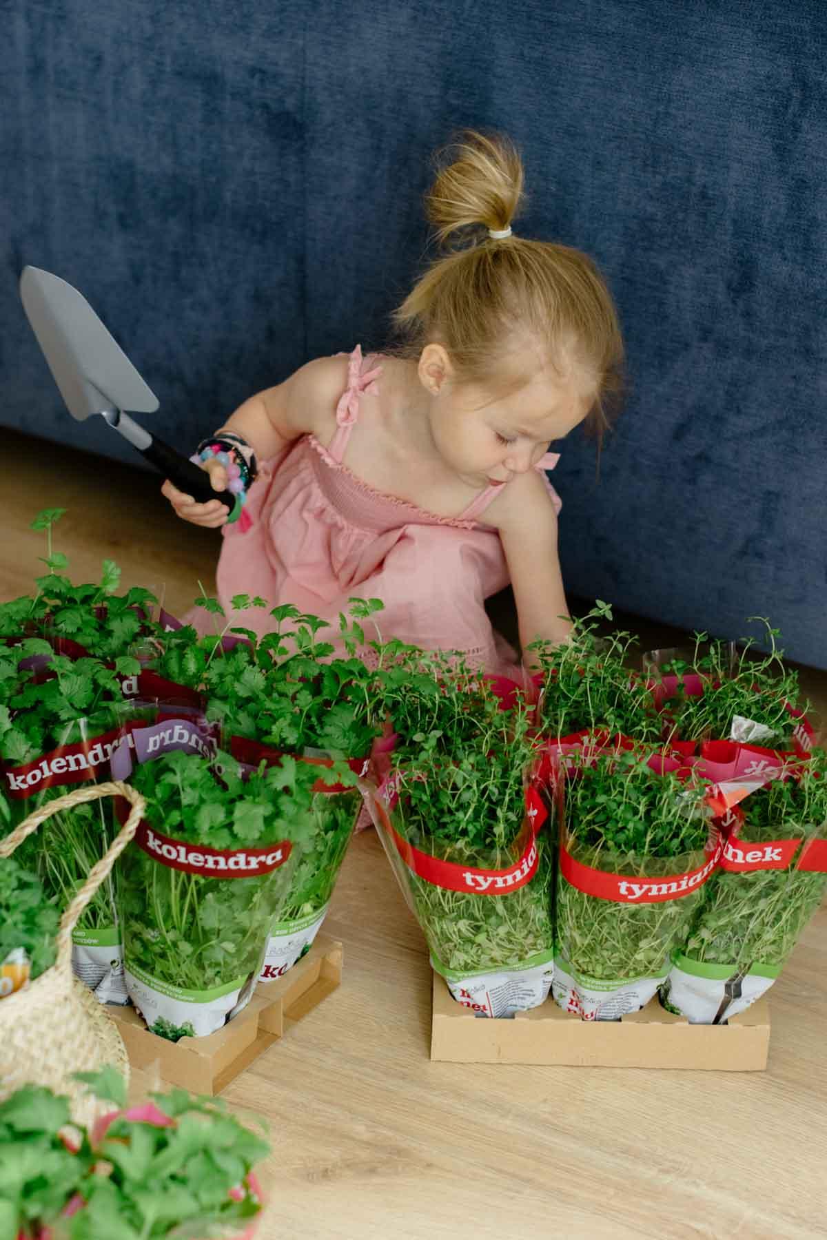 jak zaplanować ogród